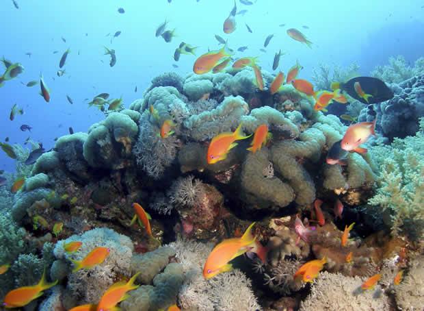 01 fondo-marino